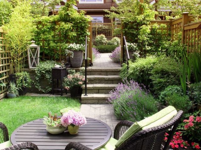 69099850 - small townhouse perennial summer garden